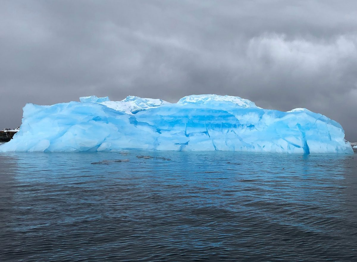 Iceberg in Antarctica - Go with Flo to Antarctica Interview | It's Megan | #antarctica #travel #zoology